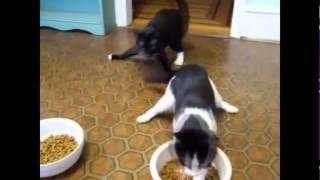 Смотреть онлайн Подборка: Как ведут себя кошки после валерьянки