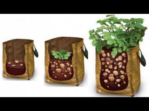 , title : 'How To Grow Potatoes in A Bag