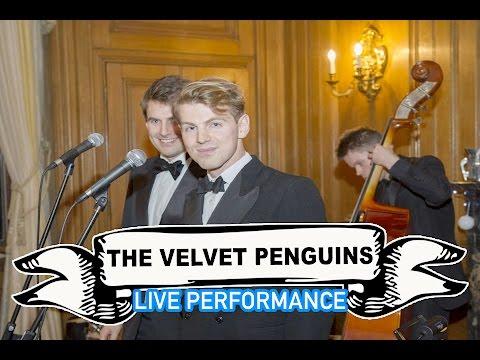 The Velvet Penguins Video
