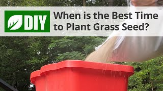 What is the Best Time to Plant Grass Seed? - Fall Lawn Tips | DoMyOwn.com