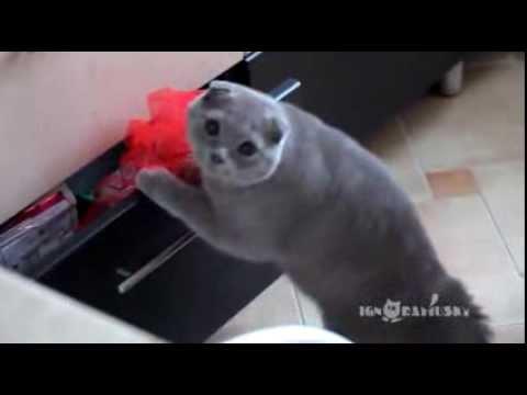 속옷-꺼내다-걸린-고양이-표정-다시보기