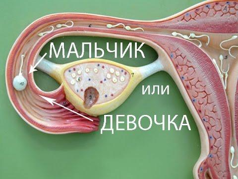 Прививка от гепатита живая