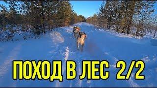 Поход в зимний лес с бездельниками 2/2.