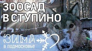 Зима в Подмосковье. Где отдохнуть и как провести время в Ступине
