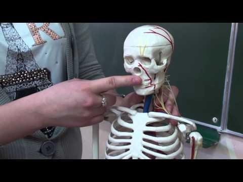 Może to być temperatura piersiowym kręgosłupa osteochondroza