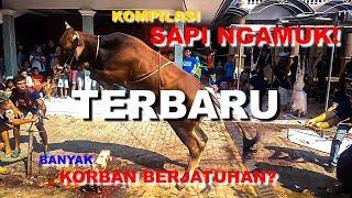 Video Sapi Ngamuk    Masjid Al Anwar    Ciganjur MP3, 3GP, MP4, WEBM, AVI, FLV Agustus 2019