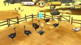My Exotic Farm video