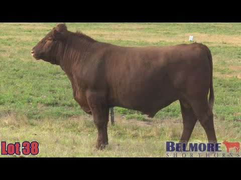 BELMORE OREGON Q284