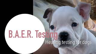 B.A.E.R. HEARING TEST FOR DOGS- Brainstem Auditory Evoked Response