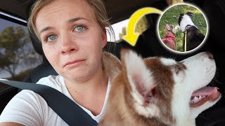 Our Dogs Meet For The First Time 😢  *ER Visit*