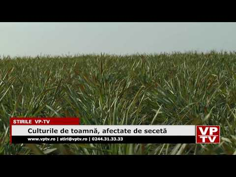 Culturile de toamnă, afectate de secetă