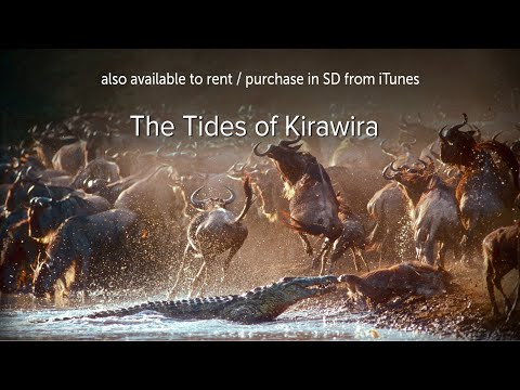 The Tides of Kirawira - OFFICIAL