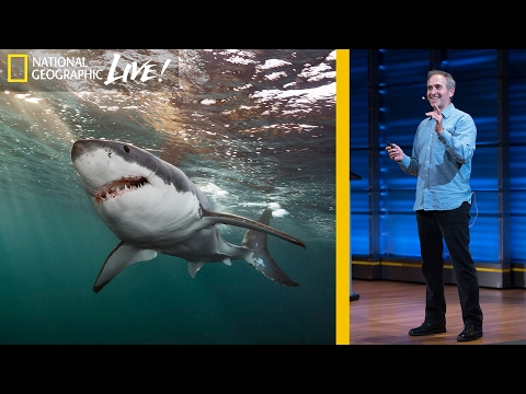 Great White and Oceanic Whitetip Sharks: Photographing Top Ocean Predators  (Part 3)   Nat Geo Live