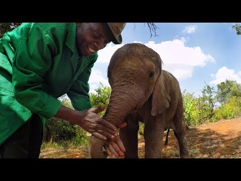 GoPro: Orphan Elephants From Kenya
