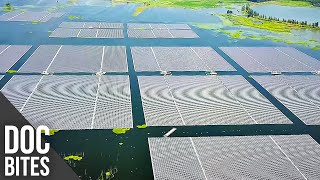 Exploring China's Floating Solar Farms