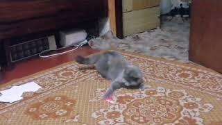 Самый умный кот!