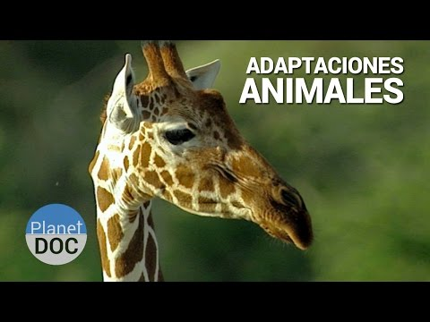 Shaba. Adaptaciones Animales | Naturaleza - Planet Doc