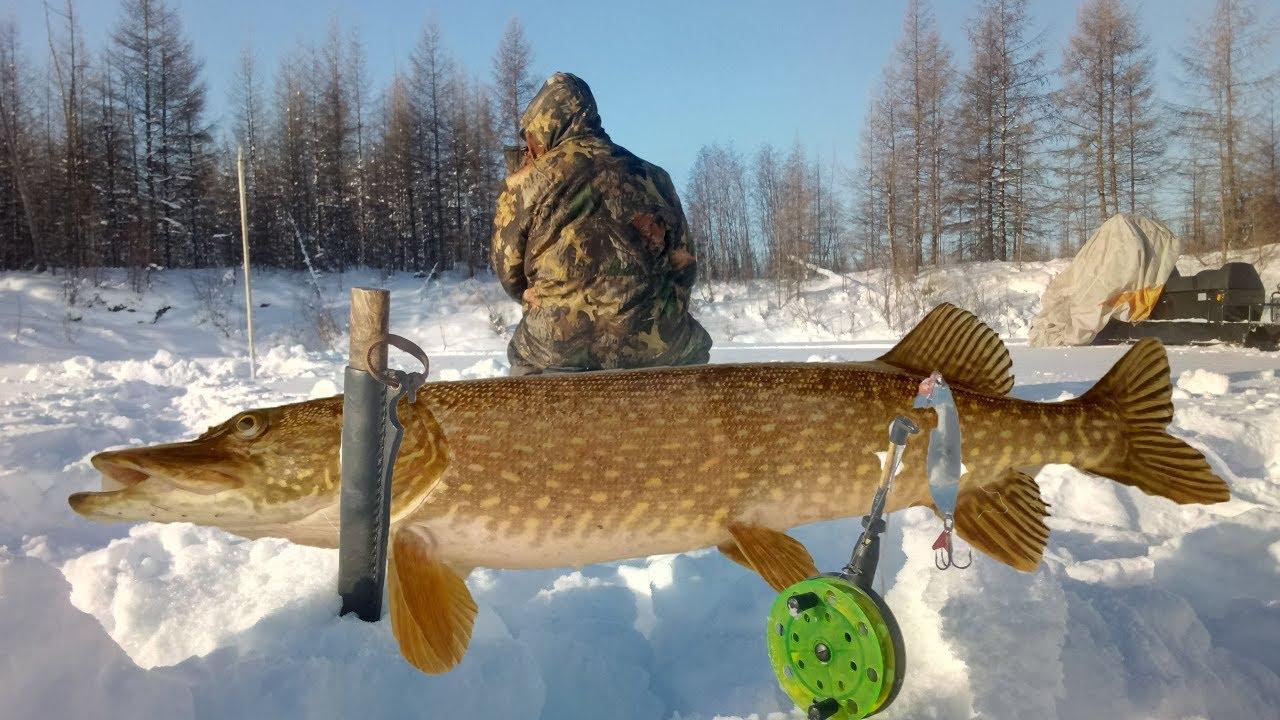 зимняя рыбалка в якутии видео