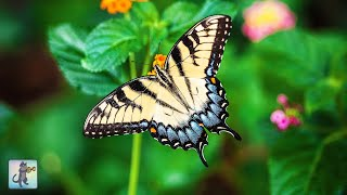 ✧ Beautiful Butterflies & Flowers・Planet Earth Amazing Nature Scenery・3 HOURS・1080p HD ✧