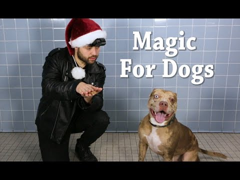 Animal shelter performs magic for dogs to show off their personalities and help them find a home