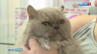 Кот, брошенный в аэропорту «Большое Савино», обрел новых хозяев