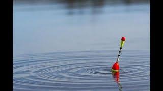 Ловля сороги на поплавок
