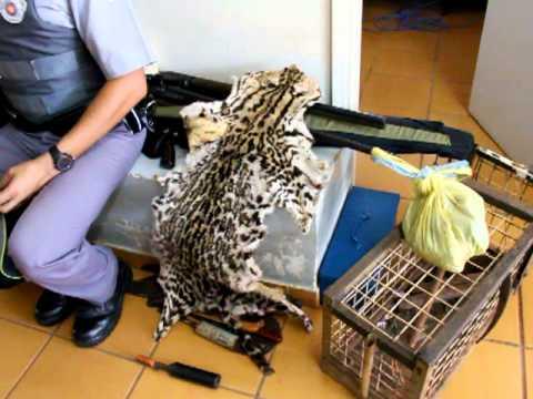 Caça ilegal em Ubirajara: apreensão de materiais de caça e peles de animais