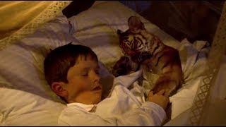 男孩收养小老虎当宠物,还抱在床上一起睡觉,长大后暴露了天性!