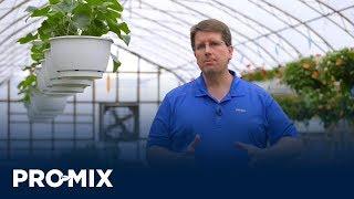 How to Grow Tough Crops like Calibrachoa