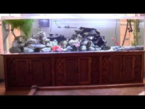 240 gallon acrylic fish tank aquarium