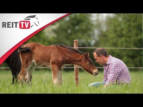 , title : 'Rasseportrait   Das Welsh-Pony