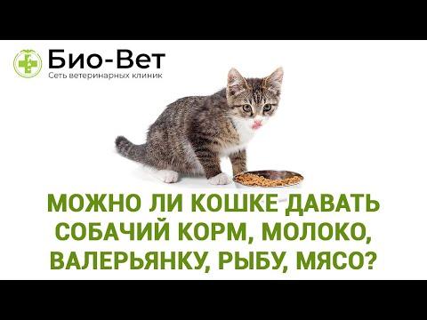 Можно ли кошке давать собачий корм, молоко, валерьянку, рыбу, мясо, сырые яйца?