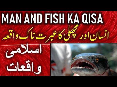 مچھلی اور انسان | اسلام علیکم | اسلامی جمہوریہ ڈین وقق 2019 | اسلامی جمہوریہ 2019