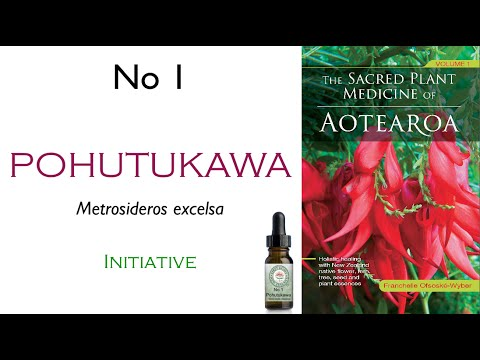 New Zealand Native Plant: No 1 Pohutukawa - The Initiative ...