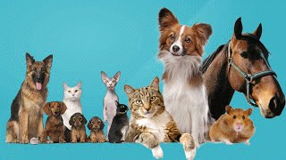 Top 20 Inspirational Quotes All Animal Lovers Should Know