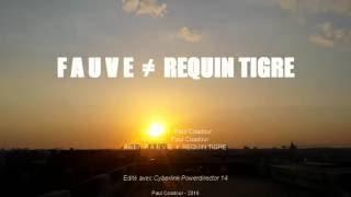FAUVE ≠ Requin-Tigre