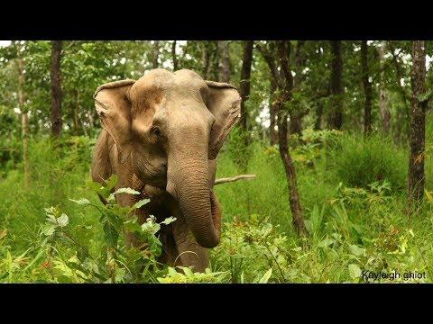This is how you can help end elephant riding in Vietnam
