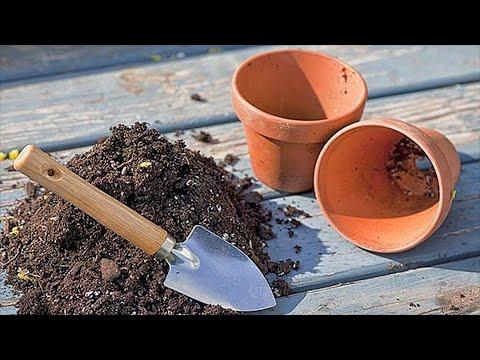 Почему нужно пересаживать растения? Секреты пересаживания комнатных растений.