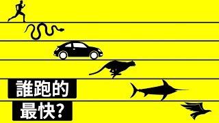世界上最快的動物是誰?