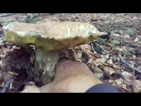 La fotografia delle gambe intaccata con un fungo