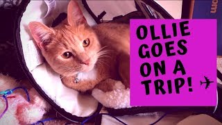 I TOOK MY CAT ON A PLANE!!! SOUTHWEST AIRLINES