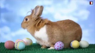Easter: Why We Celebrate Jesus' Resurrection With Eggs And Bunnies | 1MinuteDoc