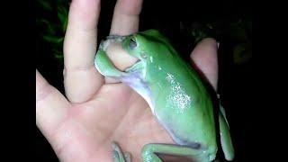 Pet Frog Nibbles on Finger || ViralHog