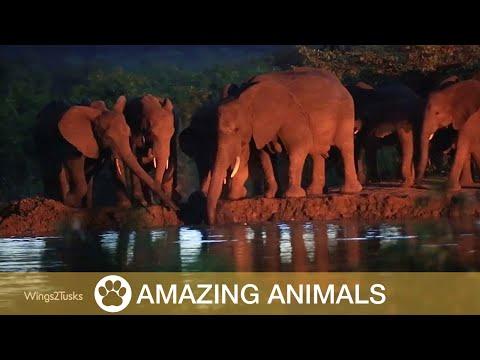 Gerettetes Elefantenbaby