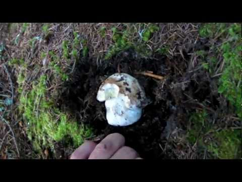 Il prezzo a mikozan da un fungo di unghie