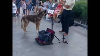 Собакен запевака