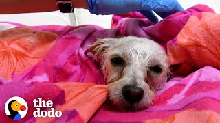 Terrified Stray Dog Finds The Perfect Family | The Dodo