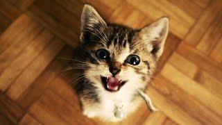 Kucing Lucu Dan Anak Kucing Mengeong. Kompilasi 2015 [Hd Baru]