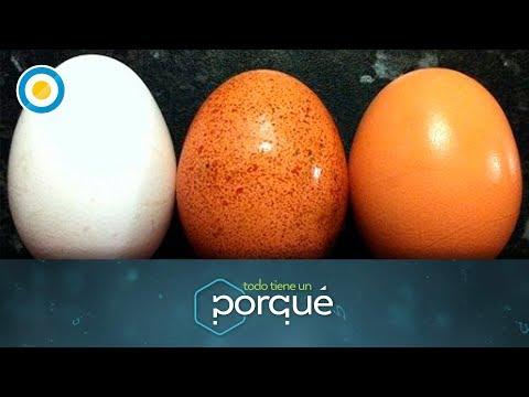 ¿Por qué hay huevos marrones y blancos? (1 de 2) - Todo tiene un porqué