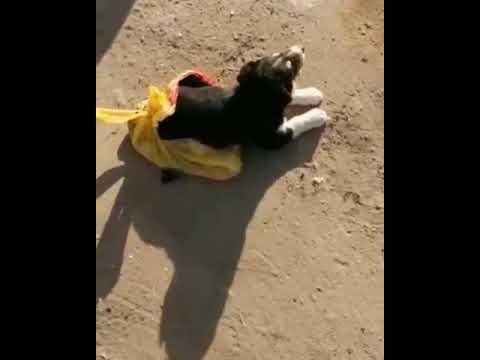 В Якутске засунули в пакет щенка и выкинули на помойку